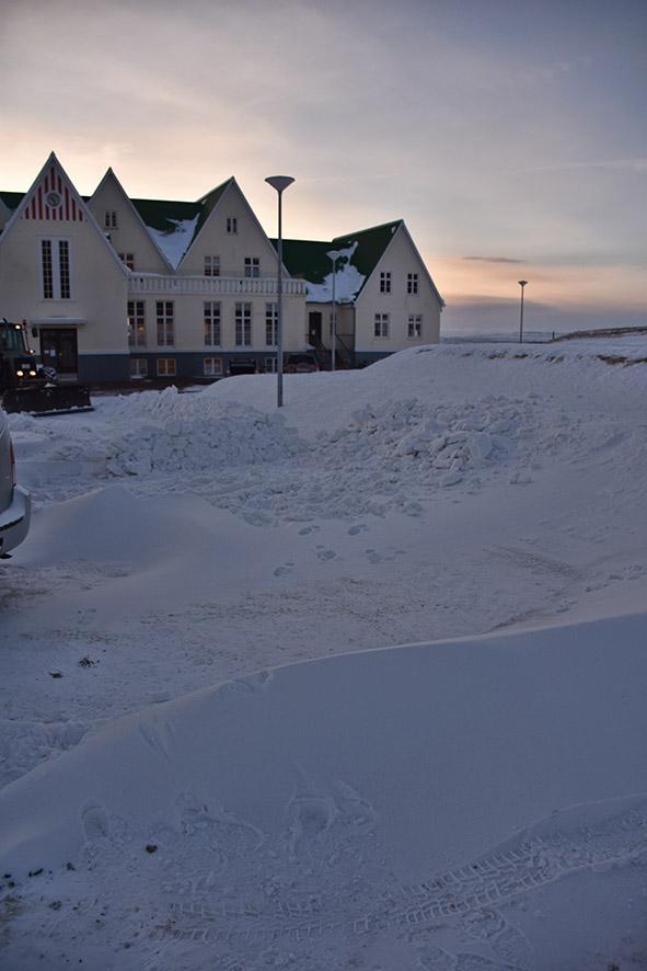 Sneeuwscheppen in de ochtend in Laugarvatn IJsland
