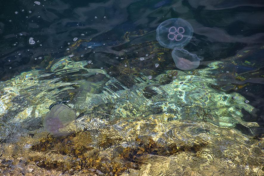 Kwallen in de zee Schotland