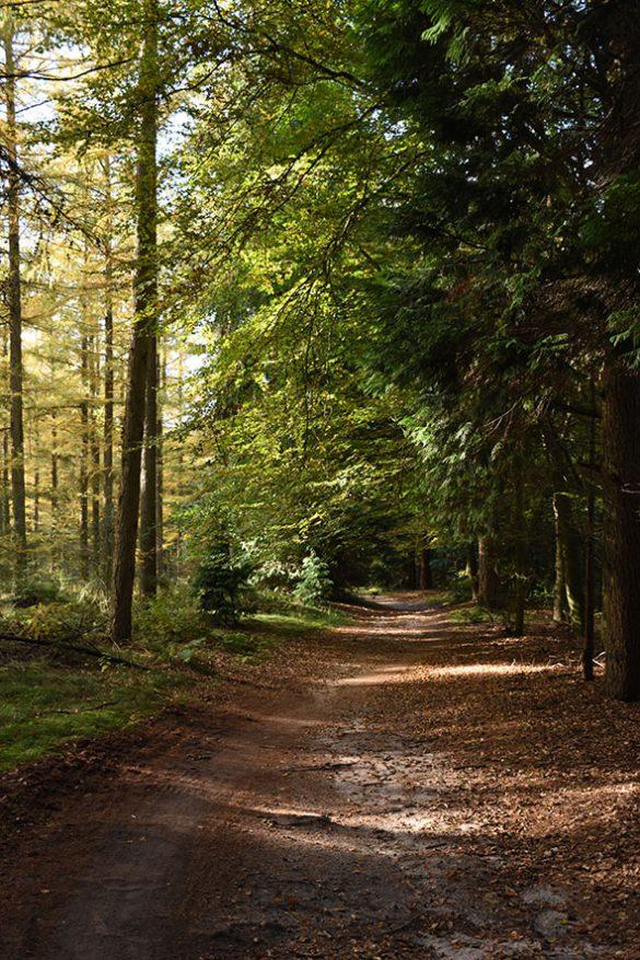 Lemelerberg bos Nederland