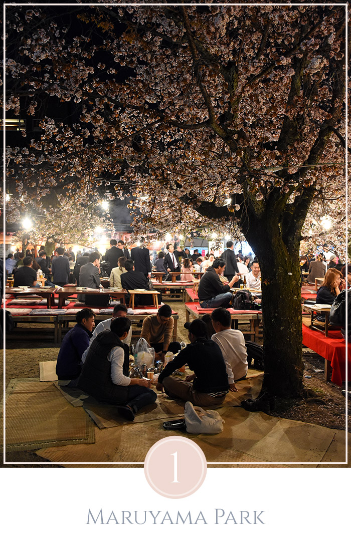 Maruyama Park in Kyoto in de avond, mannen zitten in een kring onder een kersenbloesem boom, in de achtergrond zitten meer mensen onder verlichting