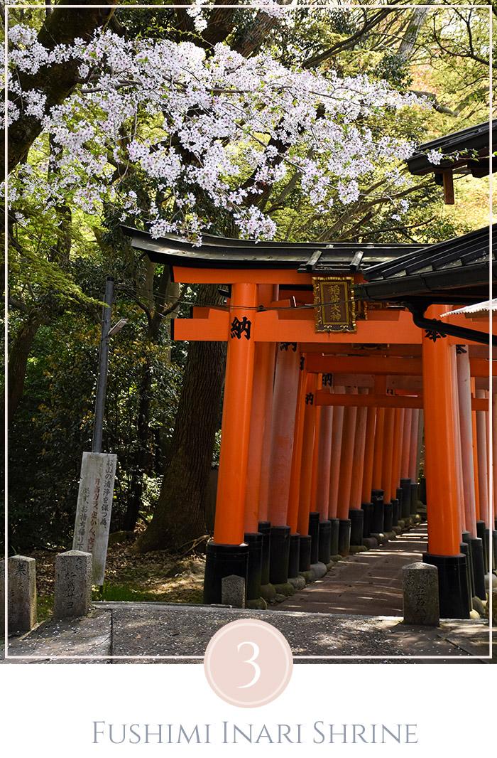 Oranje tori poorten van de Fushimi-Inari tempel in Kyoto met een overhande tak met bloesems