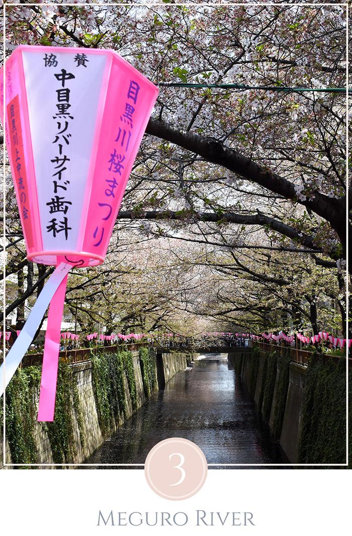 Closeup van een Japanse lantaarn met in de achtergrond Meguo River omgeven met kersenbloesem bomen, ter viering van sakura