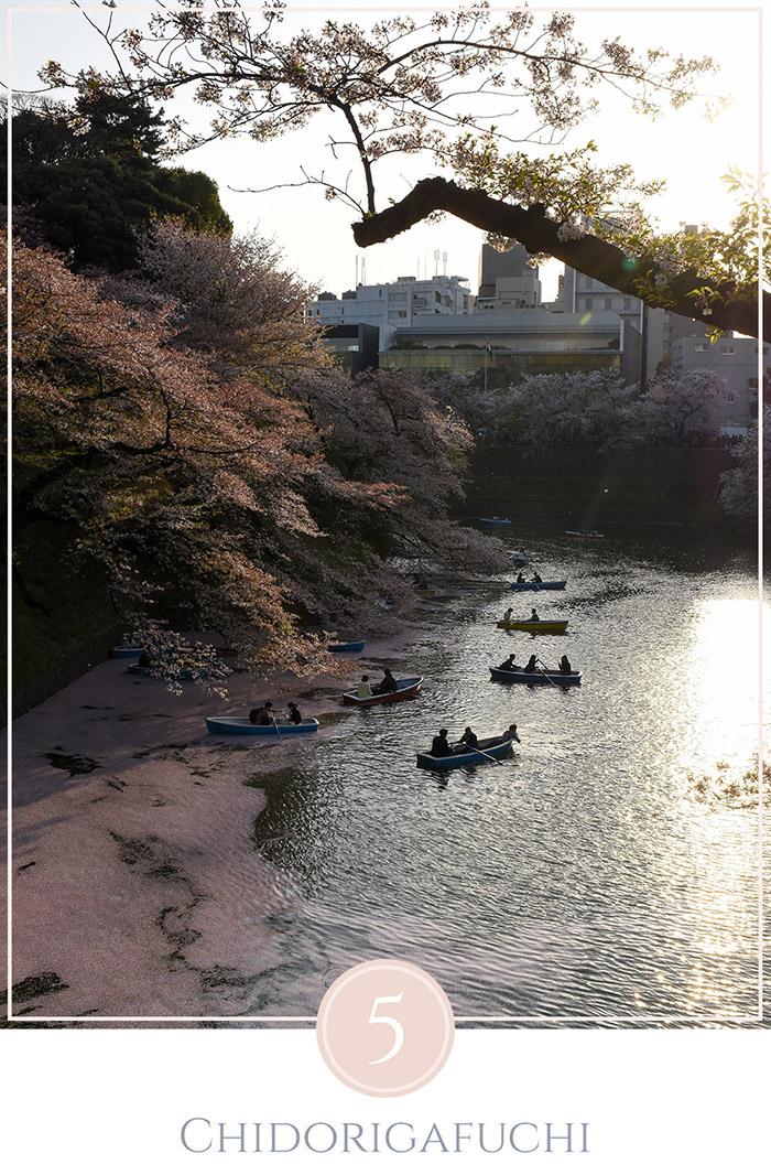 Boten in het water onder de kersenbomen, bloesems drijven in het water, de zon gaat onder,in Chidorigafuchi park in Tokyo