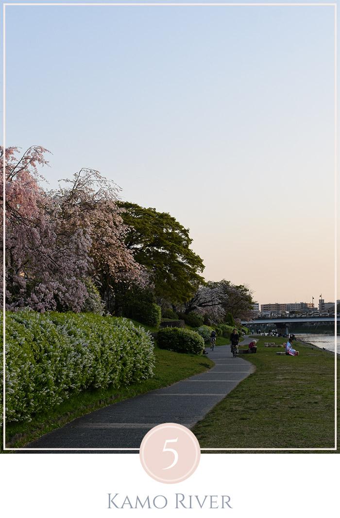 Bloesem bomen staan de oever van de Kamo rivier in Kyoto, aan het water zitten mensen in de verte