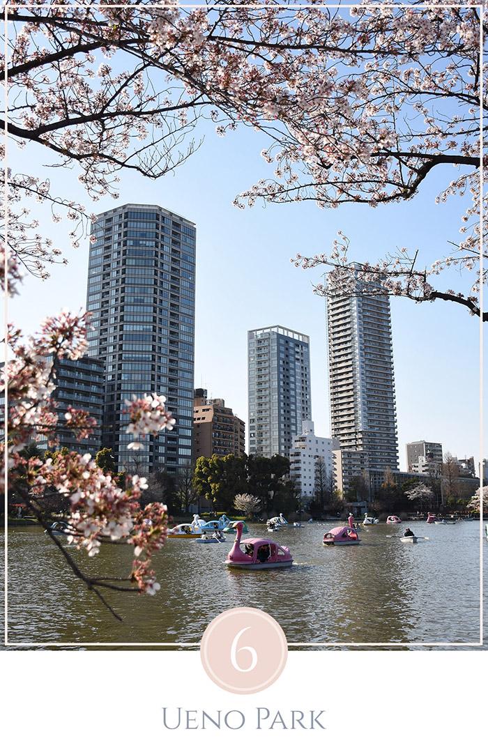 Zwanenboten op het meer in Ueno Park Tokyo, flats staan in de achtergrond omgeven door cherry blossoms