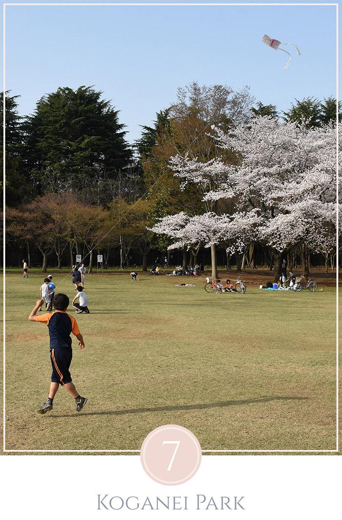 Jongen rent met een vlieger op een grasveld in Koganei Park Tokyo, in de achtergrond een bloesem boom