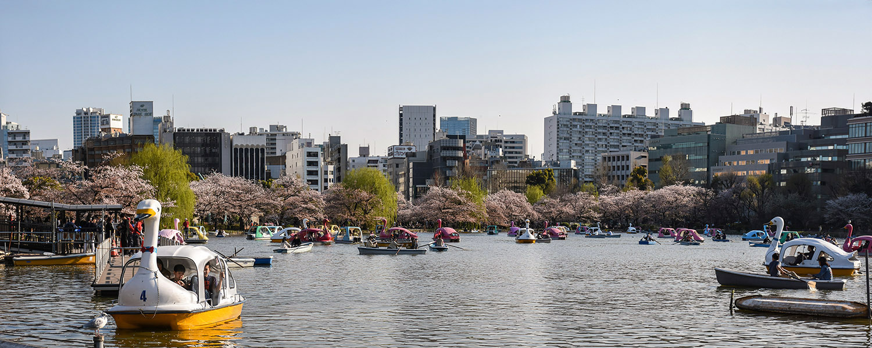 Boesemtijd in Ueno Park Tokyo waarbij zwanenboten op het meer in het park varen met bloesenbomen en de stad in de achtergond