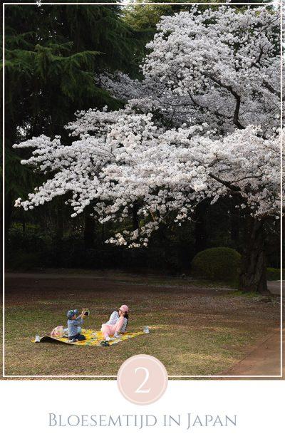 Een vrouw zit met haar zoontje onder een kersenbloesem boom, het zoontje maakt een foto van zijn moeder